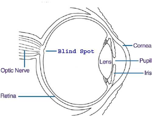 28 Blank Eye Diagram 7 Best Images Of Human Eye